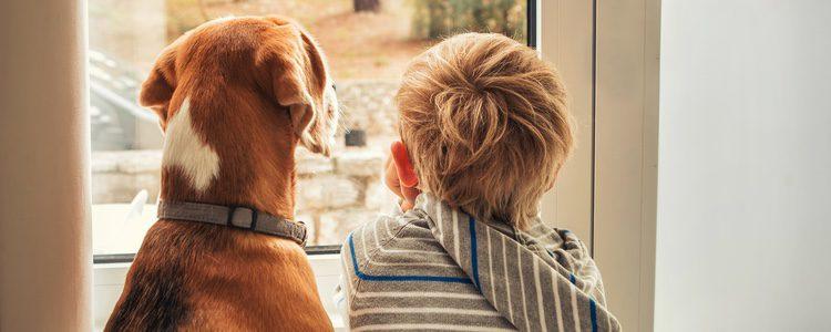 Perro ayudando y acompañando a un niño