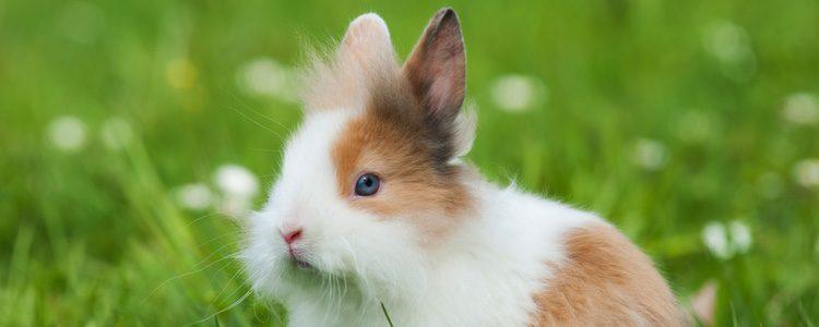 Si encuentras alguna calva en tu conejo rosa con pelusilla no te preocupes