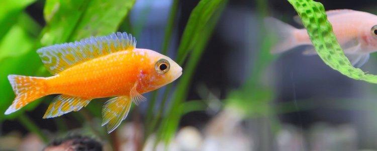 No pierdas detalle a lo que comen tus peces de acuario