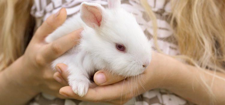 El conejo no es un roedor