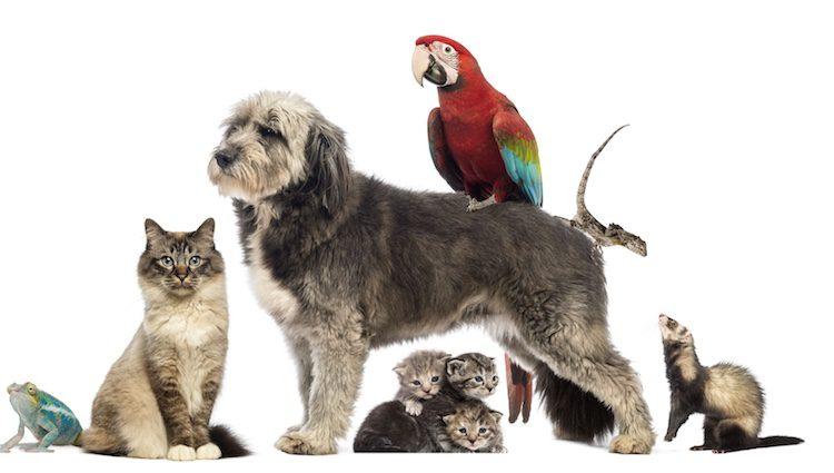 El síndrome de Noé consiste en la acumulación excesiva de mascotas