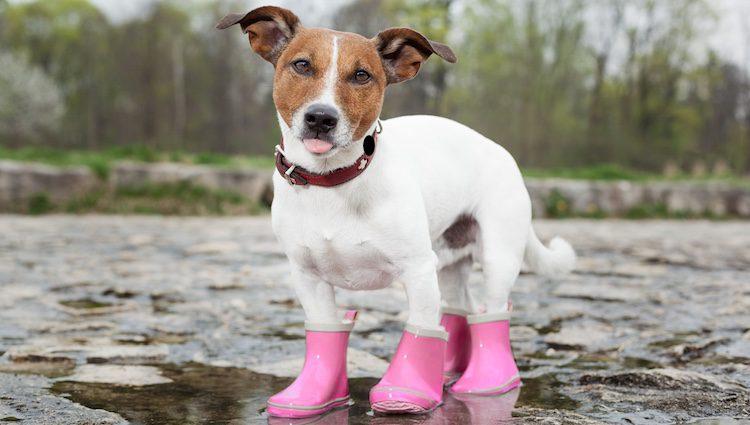 Botines para perros