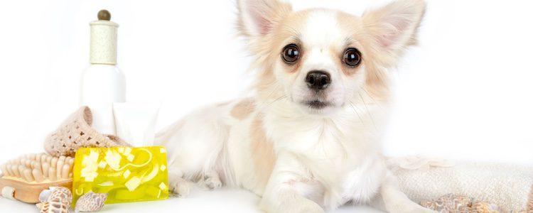 Cremas que protegen las almohadillas del perro