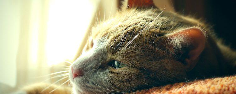 La pérdida de un animal se supera más rápido en compañía que totalmente solo