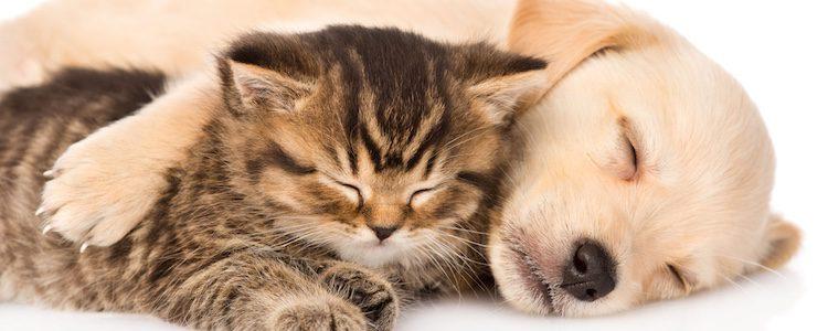 La llegada de otro perro no es el mejor remedio para superar el luto