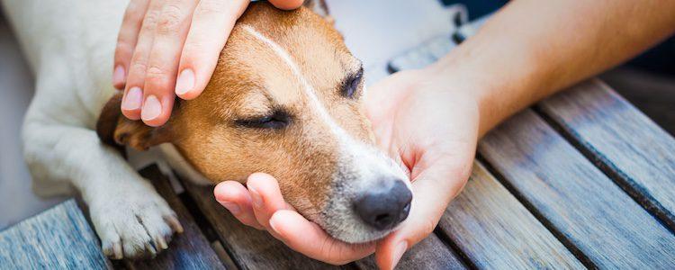 Los perros notan cuando los miembros del hogar están de luto