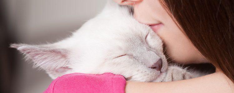 Los gatos ronronean igual que otros felinos