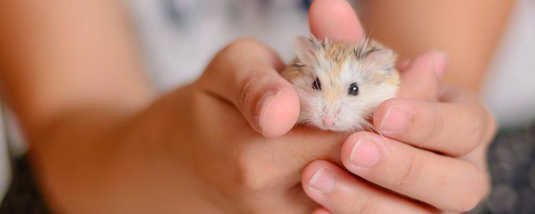 Los hámsters son las mascotas más habituales en un hogar con niños