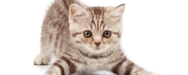 Los gatos pueden encontrar muchos peligros