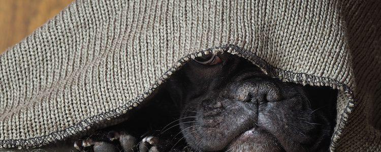 Existen otros agentes externos a nosotros los cuales pueden hacer que tu perro pase mucho miedo