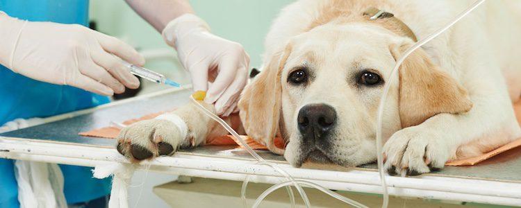 Los perros guardan miedo a los veterinarios