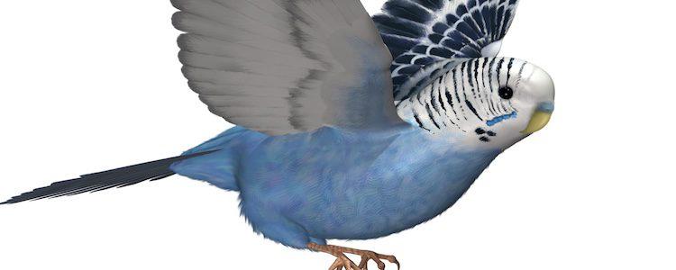 Es un pájaro pequeño y su peso oscila los 35 gramos