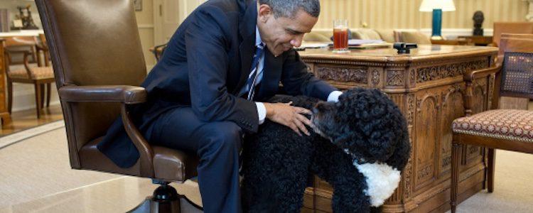 Obama con Boo