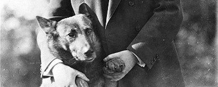 Coolidge tuvo 12 perros