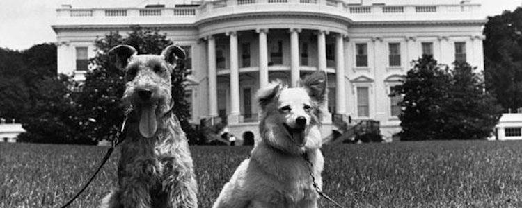Dos de los perros de Kennedy