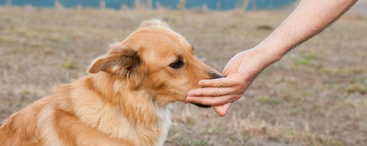 Es un perro con un comportamiento muy bueno
