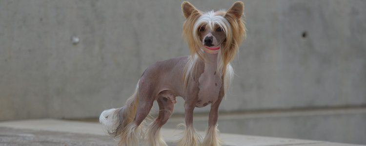 Lo que distingue una raza de otra es el color del pelo