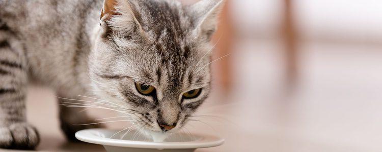 Hay que controlar la cantidad de agua que consume nuestro gato