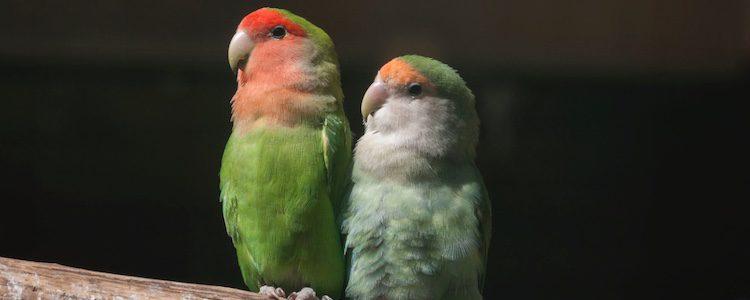 Su plumaje es de un color intenso