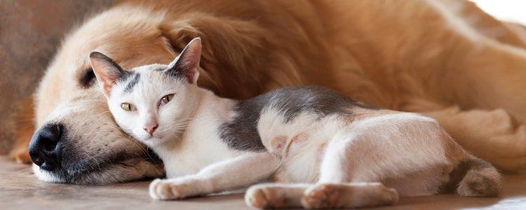 Hay estudios científicos que demuestran que las personas amantes de los perros son distintos a los de los gatos