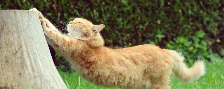 No debes quitarle las uñas a tu gato