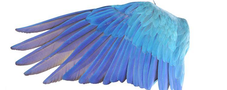 Las aves cambian sus plumas