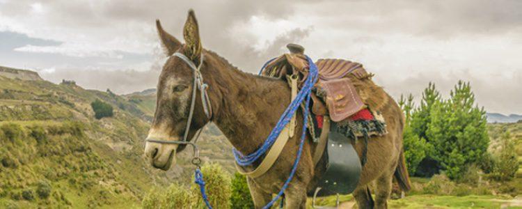 La mula emite un sonido similar al del burro