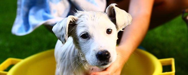 Hay muchos mitos sobre los perros y el agua