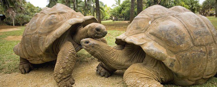 Las tortugas son animales omnívoros