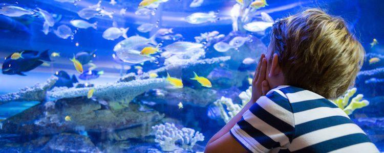 Las especies de un acuario deben ser compatibles entre sí