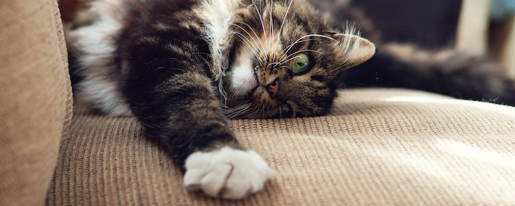 No desesperes si tu gato araña el sofá