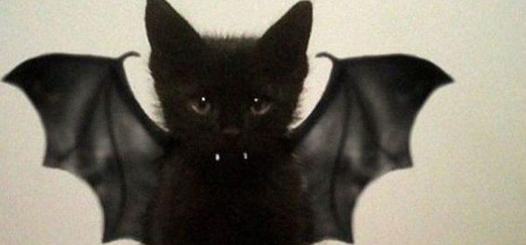 Gatito negro disfrazado de murciélago