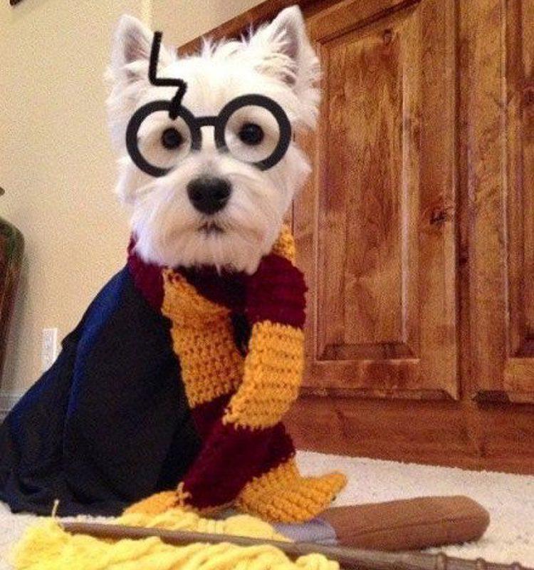 Disfraza a tu perro como Harry Potter