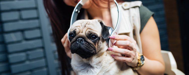 La música también tiene efecto en nuestras mascotas