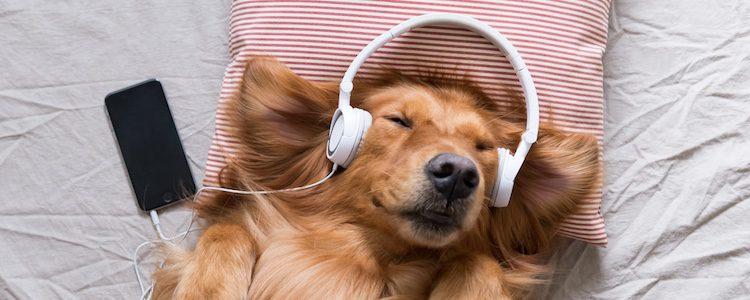 No debes poner música estridente a tu mascota