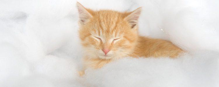 Los gatos son muy cautos con su higiene