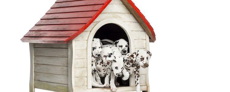 Puedes optar por una casa de madera