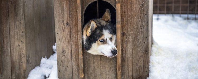 Un mueble viejo también puede convertirse en una caseta para tu perro