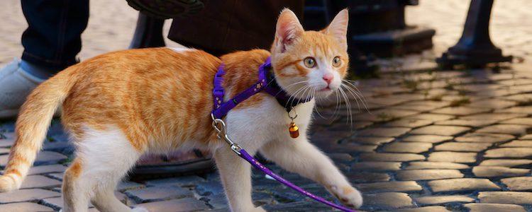 Comprueba que tu gato no tenga parásitos