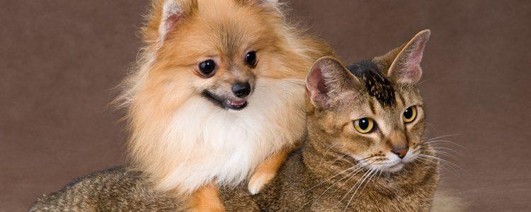 Perro y gato posando