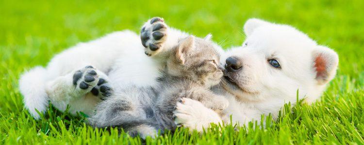 Perro y gato jugando en el parque