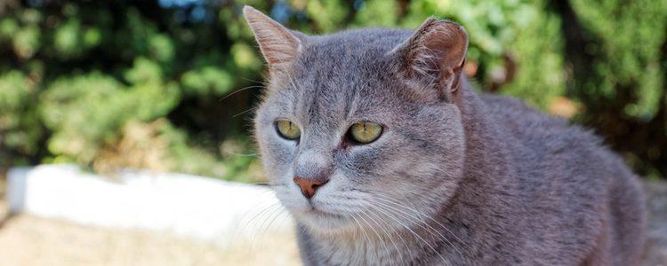 Necesitarás saber si tu gato está en la etapa adulta