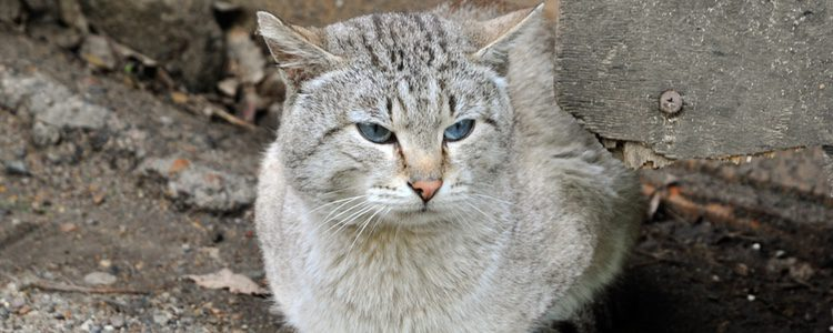 Las enfermedades renales son frecuentes en gatos mayores