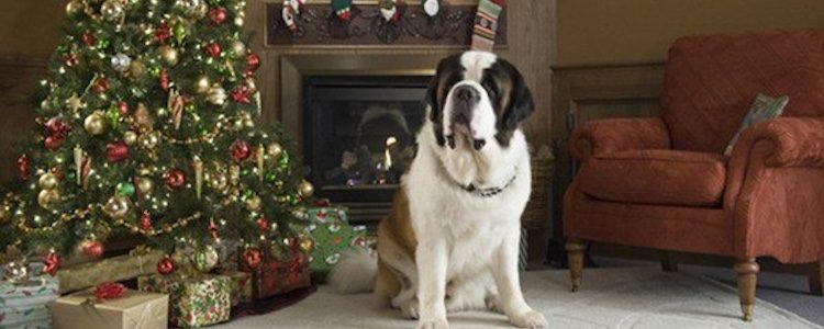 'Beethoven: Aventura de Navidad'