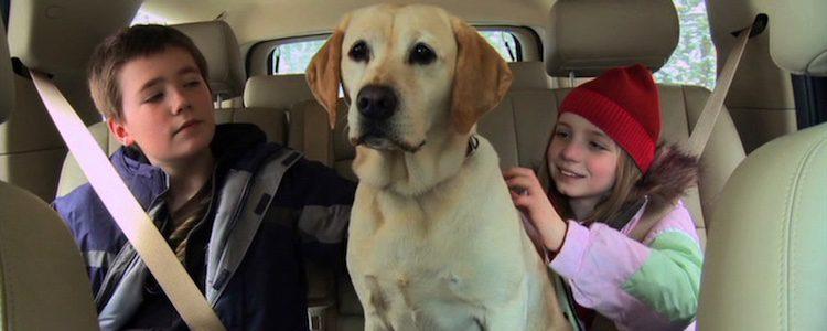 'El perro que salvó la Navidad'