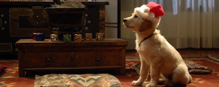 'Navidad con los Buddies'