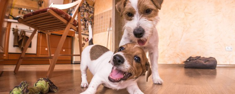 La piel de los perros puede llegar a ser muy sensible a los rayos del sol