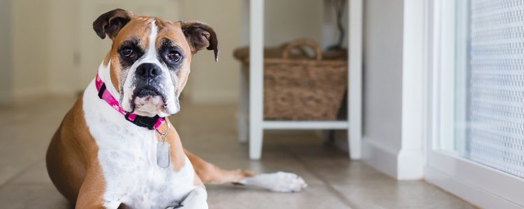 Los perros tienen hábitos que todavía no tienen una explicación