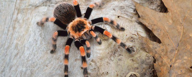 De diferencian de otros insectos por tener 8 patas
