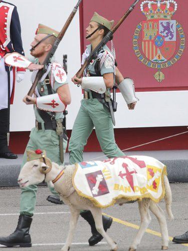 Los animales acompañaban a las tropas porque necesitaban asegurarse alimento